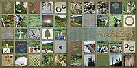 Peru_jungle_junglepics-both.jpg