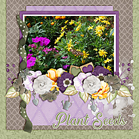 Plant-Seeds.jpg