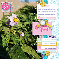 Potato-BlossomWEB.jpg