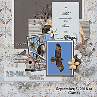 Red-Tailed_Hawk_small1.jpg