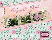 Rose-of-Sharon1.jpg
