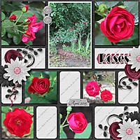 Roses5.jpg