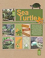 Sea-Turtle2.jpg