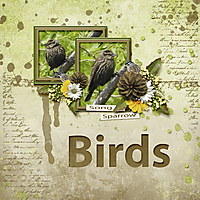 Song_Sparrow_small.jpg