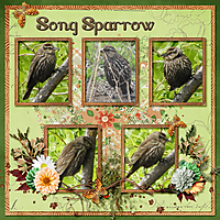 Song_Sparrow_small1.jpg