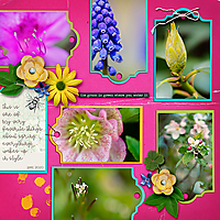 Spring-Blooms3.jpg