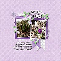 Spring_has_Sprung_web.jpg