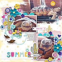 Summer-TortiesWEB.jpg