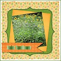 SunflowerPapers_DDD.jpg
