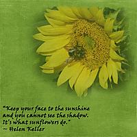 Sunflower_with_Bee.jpg
