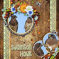 Swainson_Hawk_small.jpg