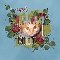Sweet_Milo_med.jpg