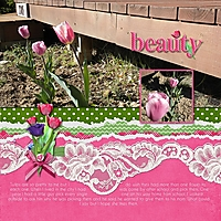 Tulip_Beauty.jpg