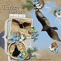 Turkey_Vulture_small.jpg