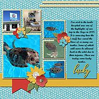 Turtle_Hospital_2018_web.jpg