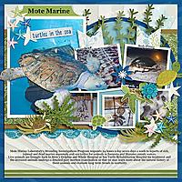 Turtles-Mote-Marine-MFish_VASummerAdv_13-copy.jpg