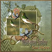 Violet-green_Swallow_small.jpg