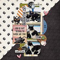 WEB_2020_April_quarantine-cat.jpg