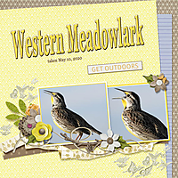 Western_Meadowlark_small1.jpg