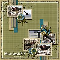 White-faced_Ibis_small.jpg