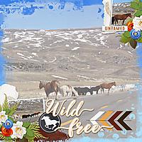 Wild700-Horses-HSA-white-space-may.jpg