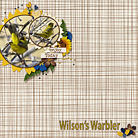Wilson_Warbler_small.jpg