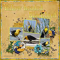 Yell0w-headed_Blackbird_small.jpg