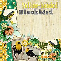 Yellow-headed_Blackbird_small.jpg