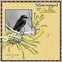 Yellow-rumped_Warbler_small.jpg