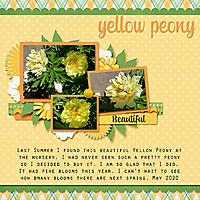 Yellow_Peony_web.jpg
