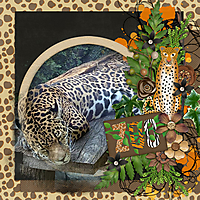 Zoo28.jpg