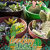 aimeeh_cactuslover600.jpg