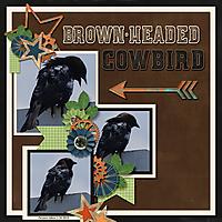 brown-headed_cowbird-Imagine.jpg