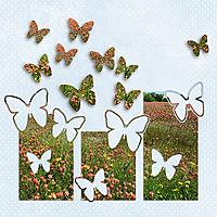 butterflies-in-flight-preview2.jpg