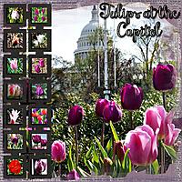 cap_tulips_Custom_.jpg
