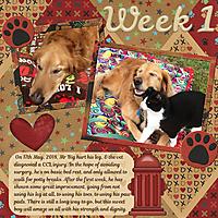 ccl_week_1_cap_dogslifetemps2_sml.jpg