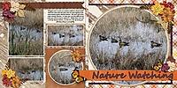 duck-naturewatch.jpg