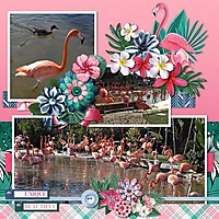 flamingo3.jpg