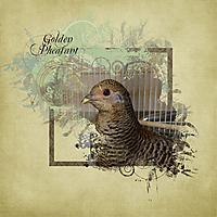 goldenpheasant.jpg