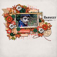 harvest19.jpg