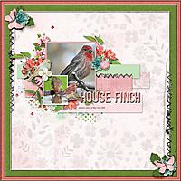 house_finch_small.jpg
