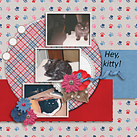 kitten1.jpg