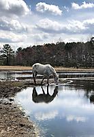 mar_2019_horse_sml_pond_reflection_54206239_839413359725895_9036170471304855552_o.jpg