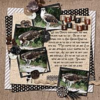 osprey-fish-pg2.jpg