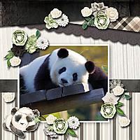 panda21.jpg