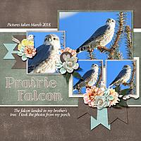 prairie_falcon_sorrow_banner.jpg