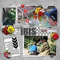 red-ibis_web.jpg