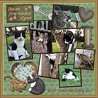 sep_2019_cats_grace_sml_cmg_my_pet_cat_mfish_evens_04.jpg