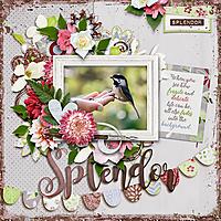splendor-copy.jpg
