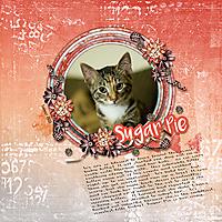 sugar-cats-2018-adoption.jpg
